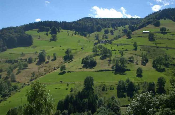 Schwarzwald_Berg